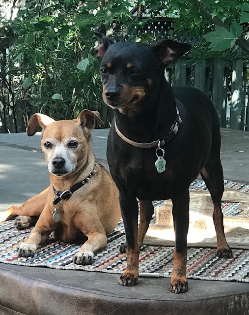 Dogs - Tyson and Baily